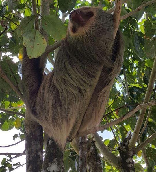 Viajes por Costa Rica