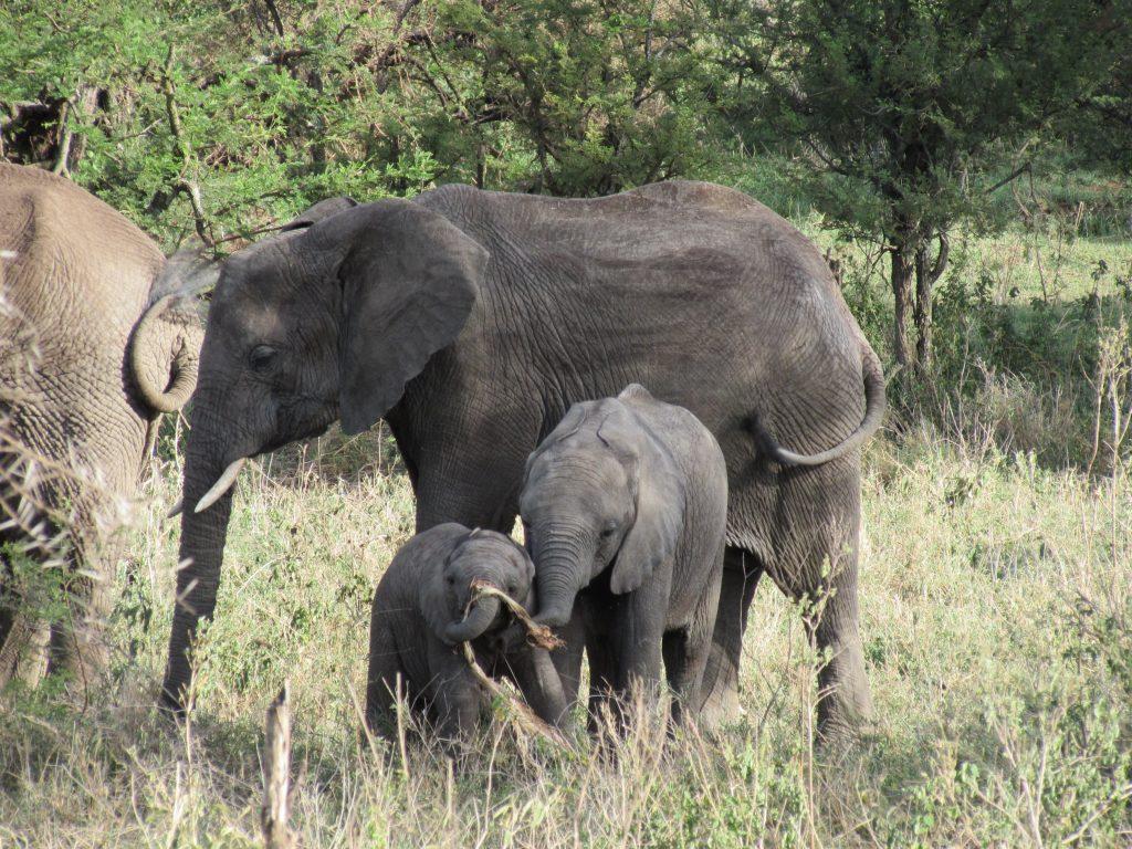 Carlos y Daniela en Tanzania (3)