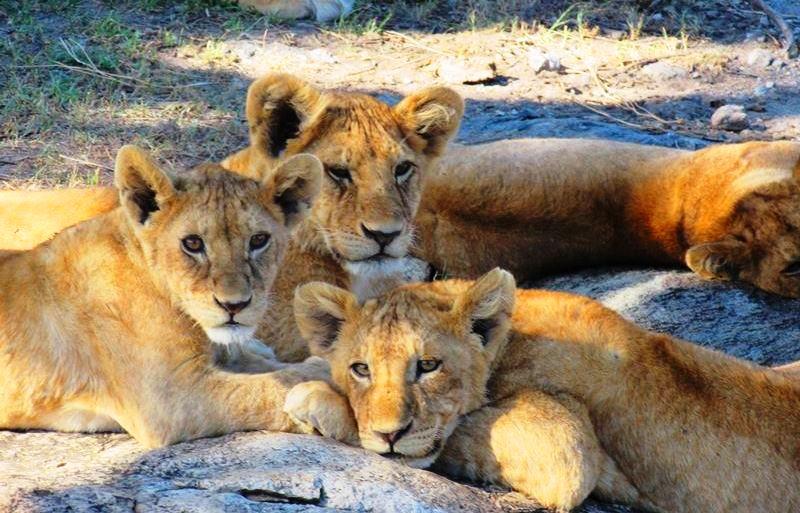 Safari en Tanzania, Safari Serengueti