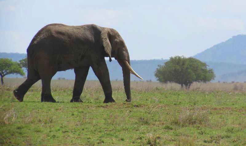 Safari enTanzania