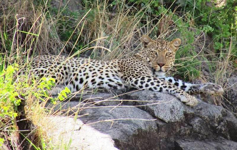 Viaje a Tanzania Safari