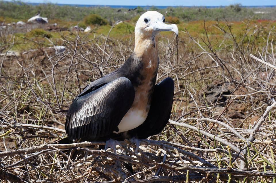 Viajes en Galapagos