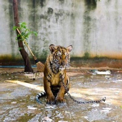 Turismo sin abuso animales