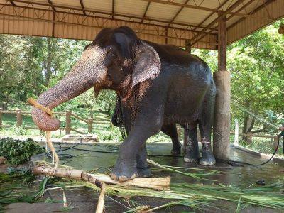 elephant-1351789_960_720-compressor